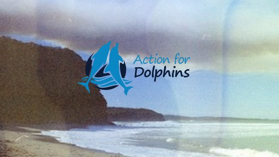 Action for Dolphins - Screening, Artists, Photography Showcase